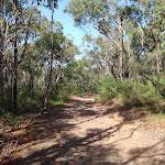 Heading through the bush (127909)