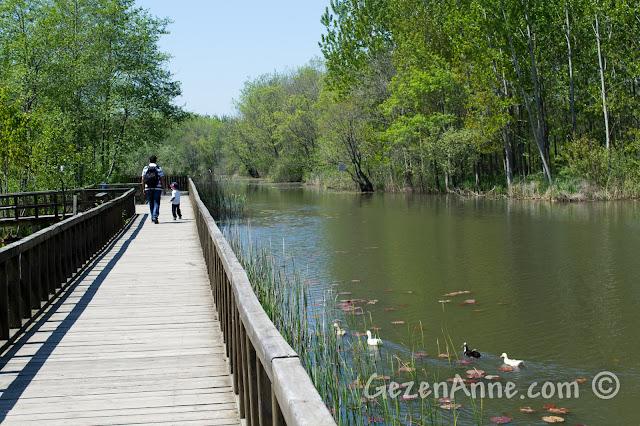 Sakarya, Karasu'daki Acarlar Longozu'nda göl ve yanında uzanan köprü