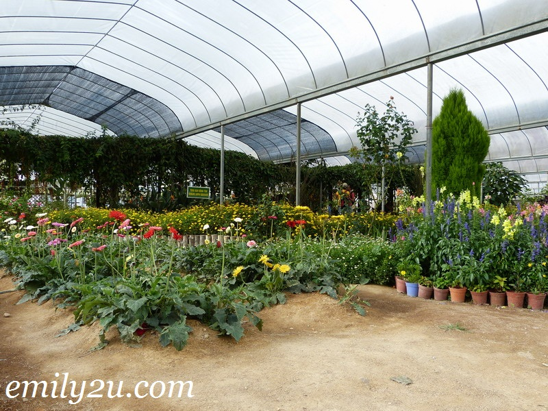Agrotechnology Park Cameron Highlands