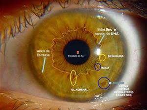 lh4.googleusercontent.com/-8obNzzbzlOI/VQ8tpJ5WcQI/AAAAAAAABpc/R6biwxWmktc/w300-h226-no/iridologia%2B1.jpg