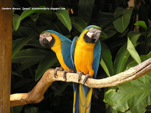Sendero Macuco, Cataratas del Iguazú, Argentina, Elisa N, Blog de Viajes, Lifestyle, Travel