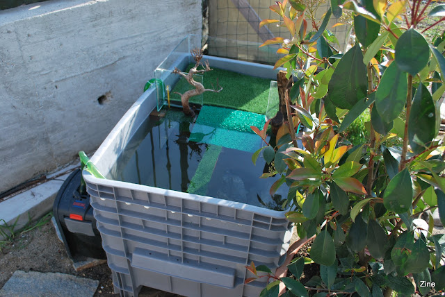 Contenitore per residenza estiva for Contenitore per tartarughe