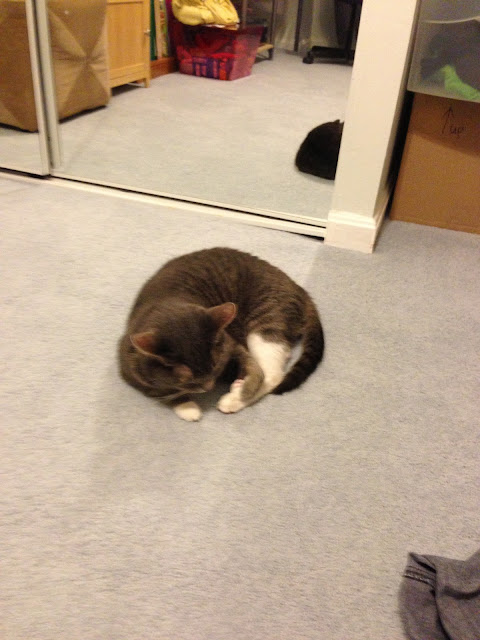 ball cat