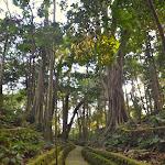 Las Małp w Ubud