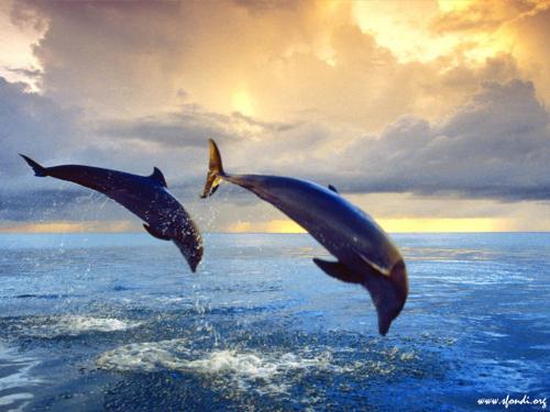 Delfini in tuffo sull