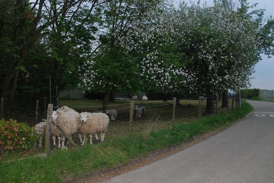 Mergellandroute, 135km/26h; Bocholtz(NL): 4-5 mai 2013 Mergel2010-106