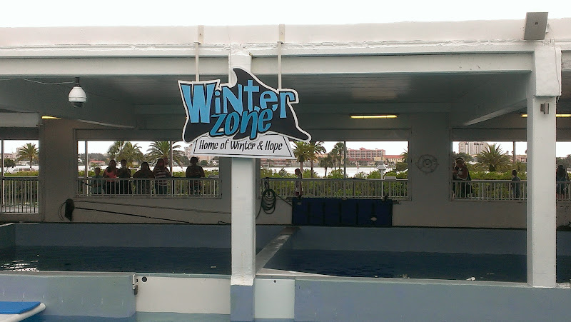 IMAG6340 A Dolphin Tale 2 Experience at Clearwater Marine Aquarium: #WinterHasHope