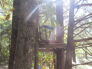Tree Stand of Love