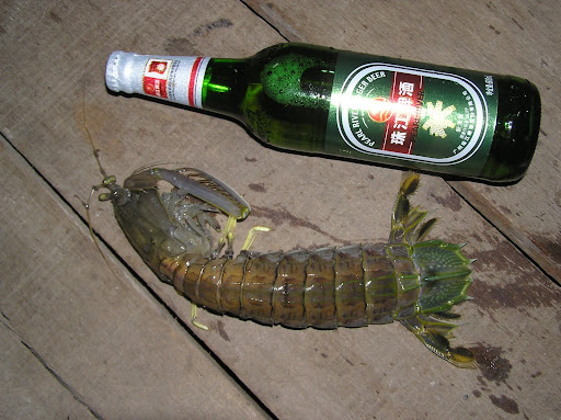 The Lazy Lizard's Tales: Mantis Shrimps of Singapore (ONETWOTHREE ...