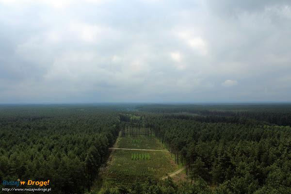 Wieża widokowa w Puszczy Noteckiej