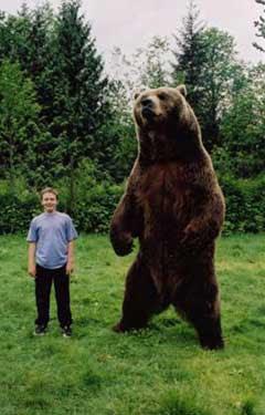 Urso pardo vs Urso polar - Página 2 372