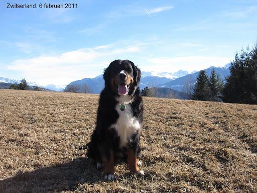 Zwitserland chalet  6feb2011.JPG
