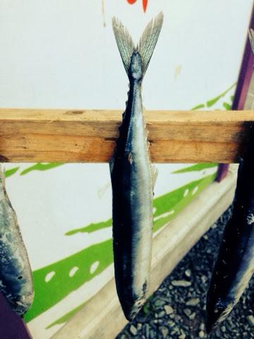 気仙沼の秋刀魚