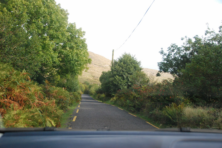 Oh, those narrow Irish roads, lined with fuschia bushes! From 5 Tips on Driving in Ireland