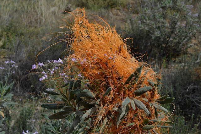 wad of orange wires