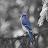 Patrick Younggreen avatar image
