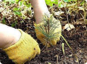 фото Всероссийский день посадки леса