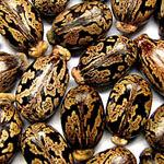 Castor Oil - Castor Oil Uses
