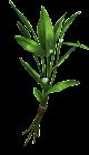 Centinodia