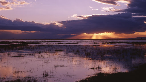 Amboseli National Park, Kenya.jpg