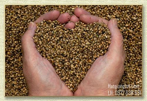 Hướng dẫn cách bảo quản hạt giống