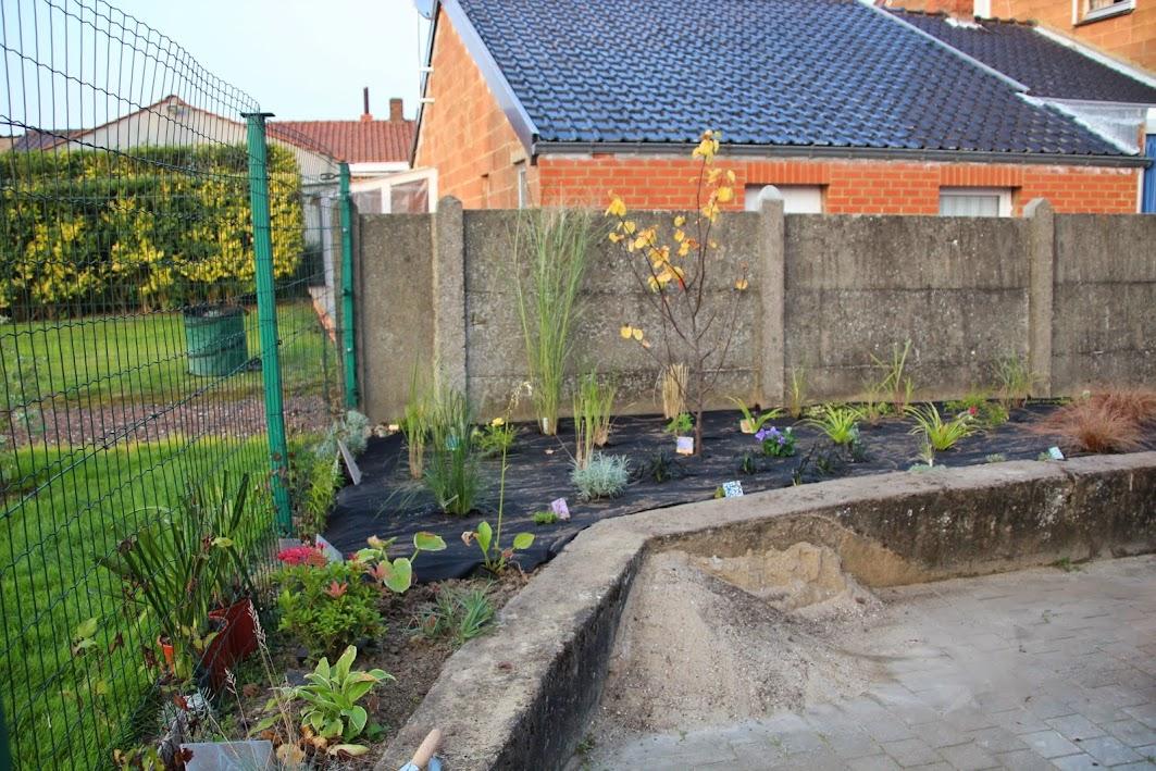 Nouvelle maison dit aussi nouveau jardin... IMG_9524