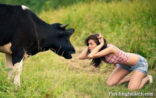 Hình ảnh hài con Bò và Phụ nữ