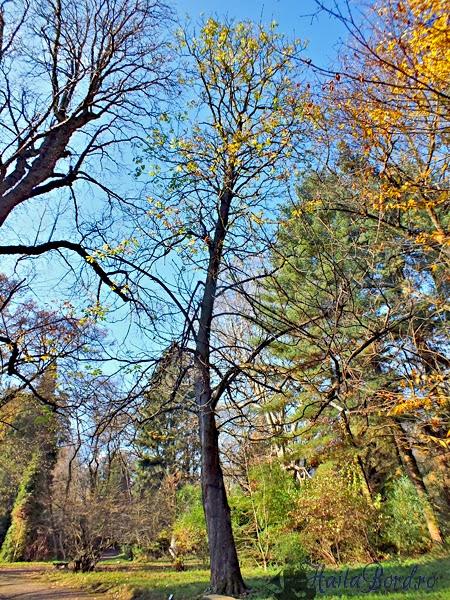 copac parc simeria
