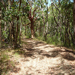Trail on the Wallarah Pennisula Walk (388955)