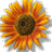 Jessie Webb avatar image