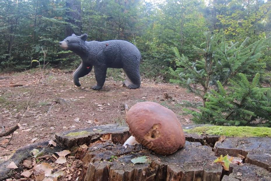 medvěd focený přez houbu