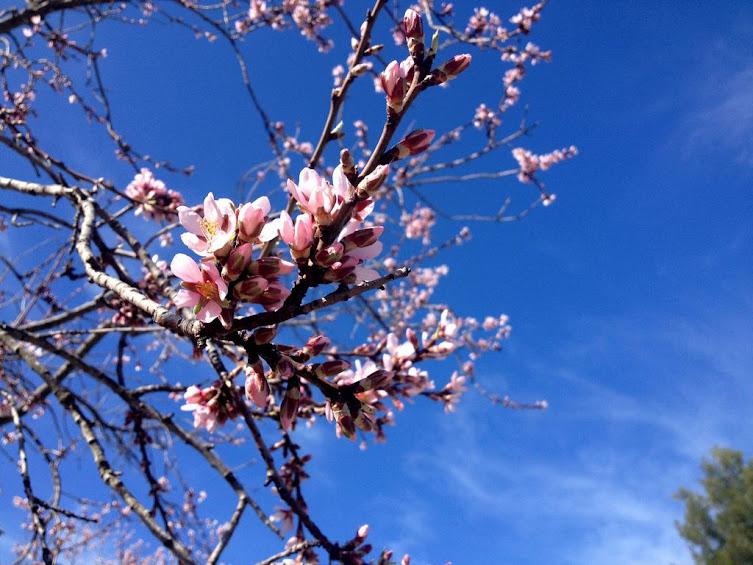 Almendros en Flor, Sierra de Aitana