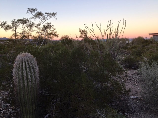 Evening in the desert