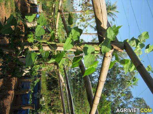 Agriviet.Com-IMG_1847.JPG