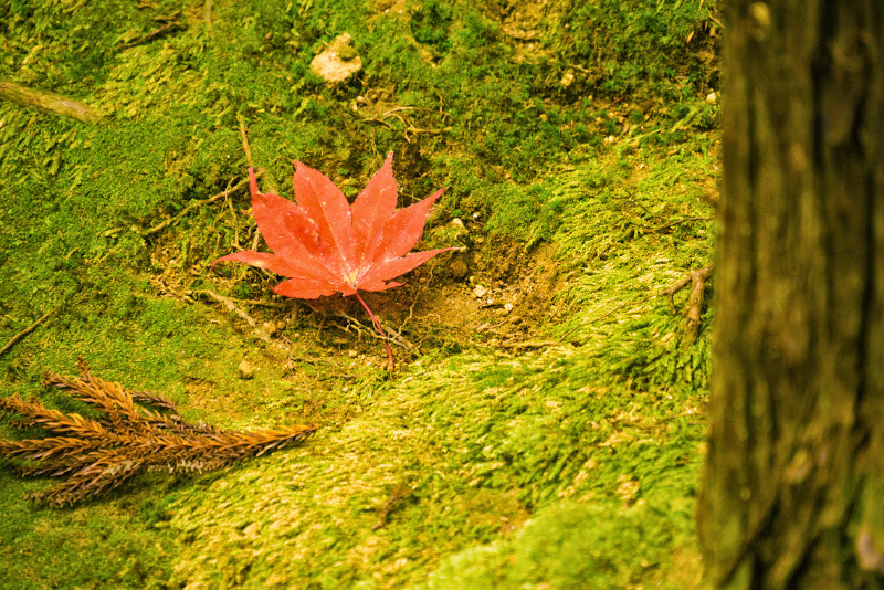 京都 銀閣寺 紅葉 写真9