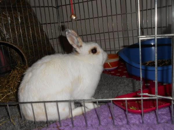 Mirana, lapine blanche-[adoptée] Mirana1-e15bf