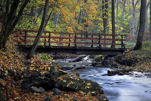 ảnh cây cầu mùa thu đẹp