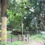 Stile at Cedar Brush track head  (366581)