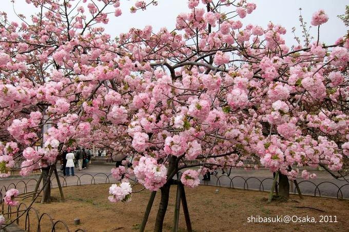 20110415_Osaka-33_大阪造幣局_1_1.JPG