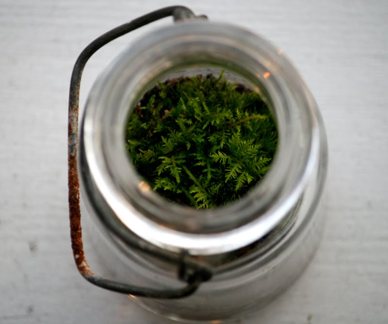 Canning Moss