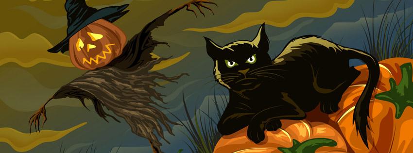 Ảnh bìa hình chú mèo đen trong đêm tối