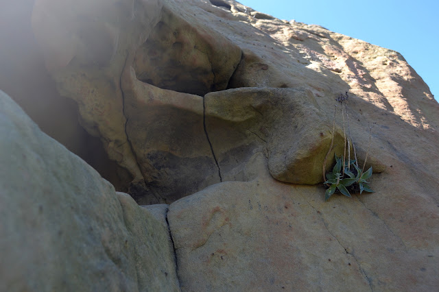 plant coming out a crack in the rock