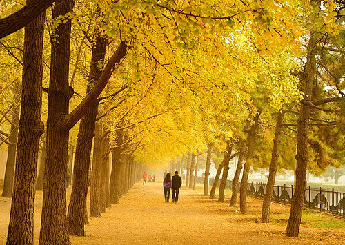 Thơ tình khoán thủ về mùa thu