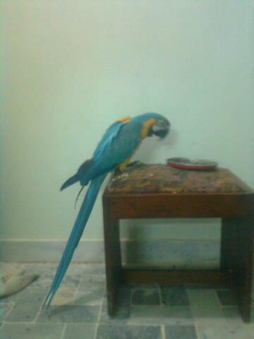 Olx Birds Related Keywords & Suggestions - Olx Birds Long Tail Keywords