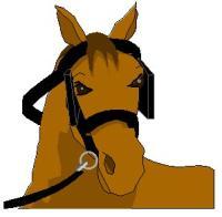horse-9.jpg