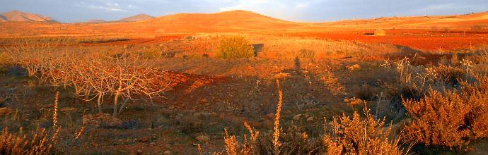 Felder im Abendlicht bei Ait Kamara