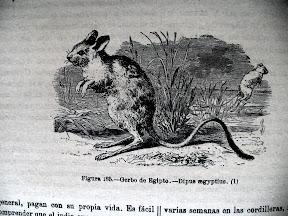 Ilustración de Gerbo.
