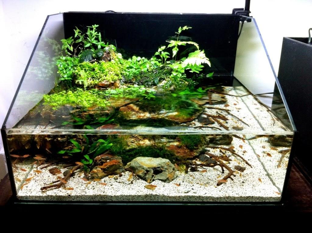 mẫu hồ kính thủy sinh cho hồ bán cạn