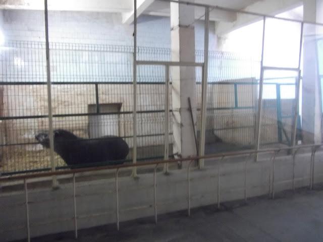 Boksy tapirów