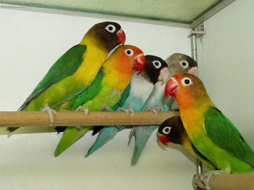 Love birds for Birdhouse types
